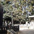 Photos: 福島 医王寺