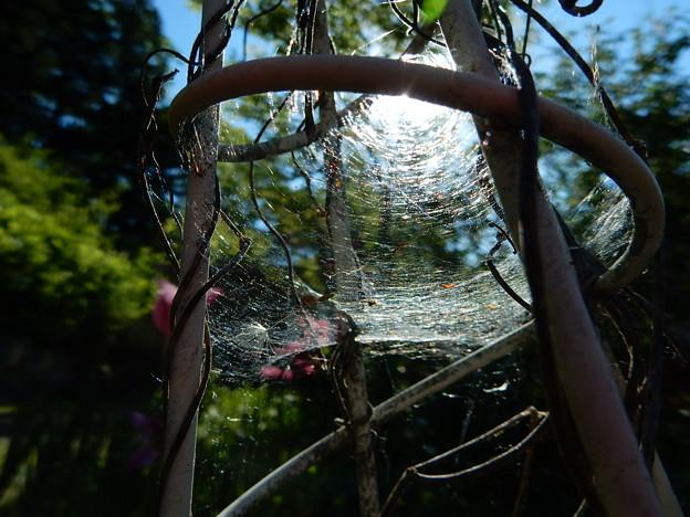 蜘蛛の巣にかかった太陽2