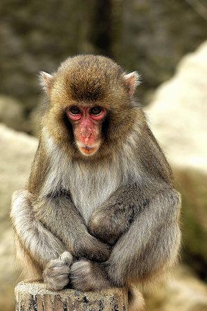 小猿(6)