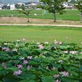 Photos: 備中高松城跡 蓮池