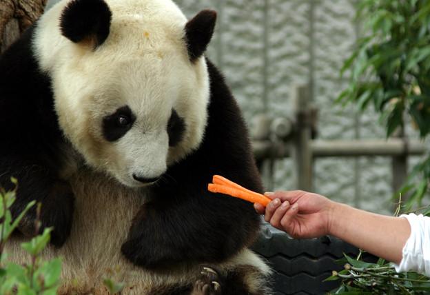 パンダの見る目