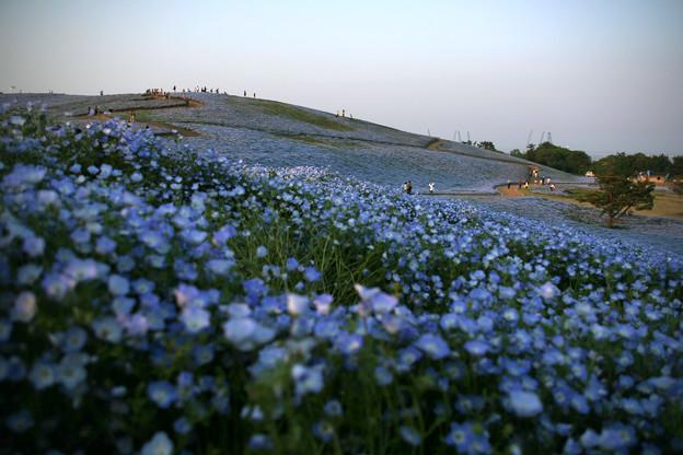 夕暮れのみはらしの丘
