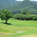 写真: 足利カントリークラブ選手権多幸コース13番ホール2014.6.15