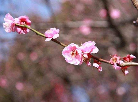 mukaiyama-umematuri-210215-11