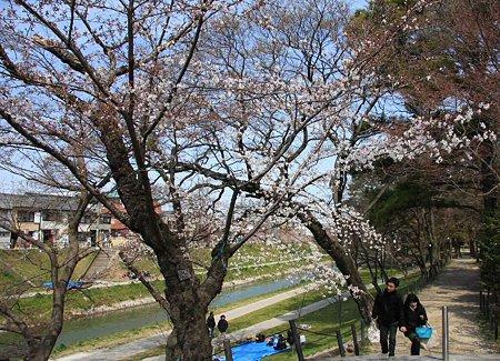 okazakizyou sakuramaturi-210328-11