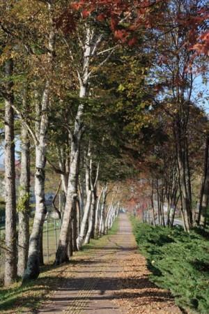 散歩道(白樺湖)