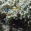写真: 小さい魚たち