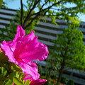 写真: 100_0549