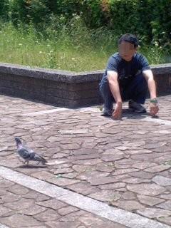 鳩と戯れ(5月31日、神奈川縣護國神社)