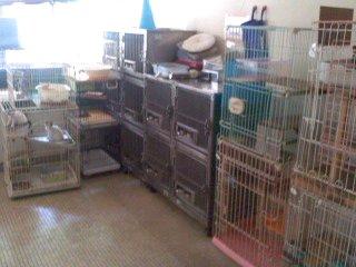 保護猫(6月2日、動物愛護センター)