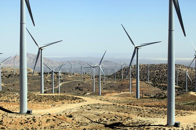 1-風車畑