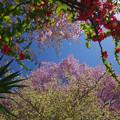 Photos: 溢れる春