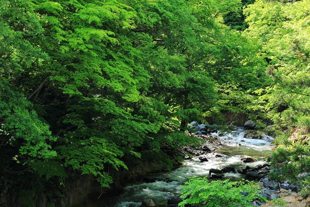 大自然と川のせせらぎ