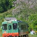 写真: 藤の花咲く #真岡鐵道 北山-益子 2014/05/18