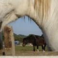 馬のトンネル白茶白