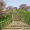 Photos: 県立さきたま古墳公園(行田市)