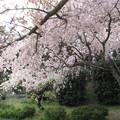 Photos: 14.04.10.水城公園(行田市)