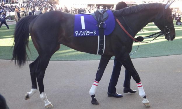ダノンバラード(5回中山8日 10R 第58回グランプリ 有馬記念(GI)出走馬)