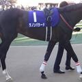 写真: ダノンバラード(5回中山8日 10R 第58回グランプリ 有馬記念(GI)出走馬)