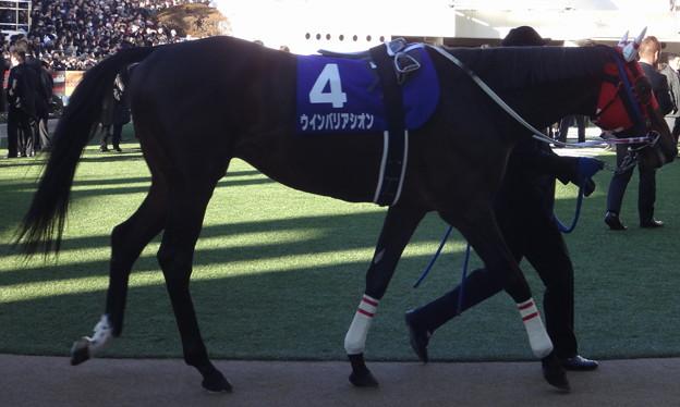 ウインバリアシオン(5回中山8日 10R 第58回グランプリ 有馬記念(GI)出走馬)