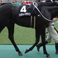 Photos: リバティーアゲイン(3回東京2日 12R 三浦特別(サラブレッド系3歳以上1000万下)出走馬)