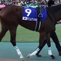 デニムアンドルビー(5回東京8日 11R 第33回 ジャパンカップ(GI)出走馬)