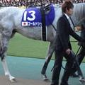 ゴールドシップ(5回東京8日 11R 第33回 ジャパンカップ(GI)出走馬)