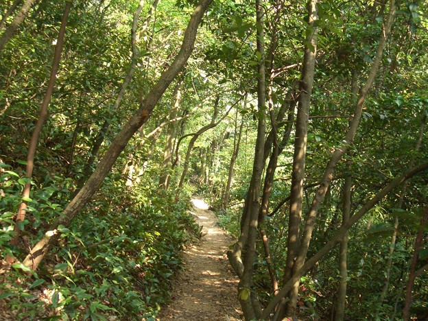 森の中の小径