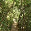 Photos: 森の中の小径