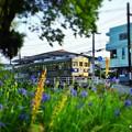 Photos: カキツバタときくち電車。