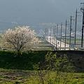 Photos: 人の営みの近くにある春を撮る