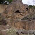 写真: 到津の森(1)サル山
