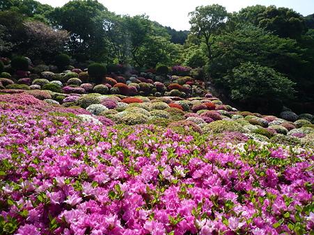 御船山楽園のつつじ(3)