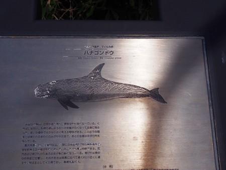 toumeisaki_taiji09