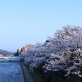 浅野川大橋と満開の桜