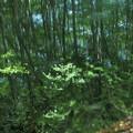 池  美人林