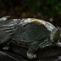 Photos: 亀の頭から水