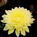 Photos: 一輪の花