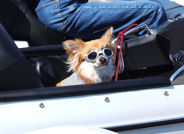 Photos: サイドカーに犬  ?