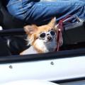 サイドカーに犬  ?