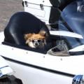 Photos: サイドカーに犬