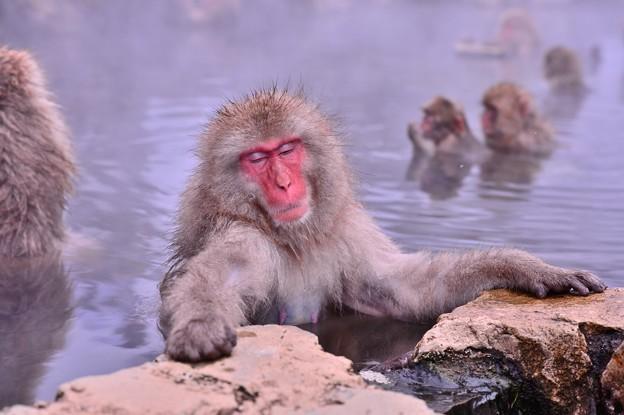うとうとと。。寝てしまうほど気持ちいい温泉。。。
