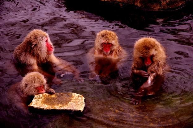 本格的に降ってきた雪・・温泉つかる猿さんたち・・