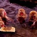 Photos: 本格的に降ってきた雪・・温泉つかる猿さんたち・・