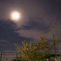 Photos: 朧月夜