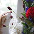 お花見しますニャン