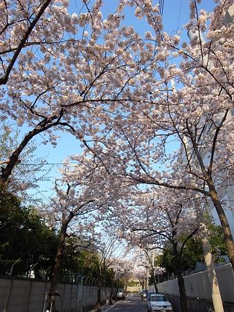 南千住・東京ガス千住テクノステーション周辺の桜(2009/4)