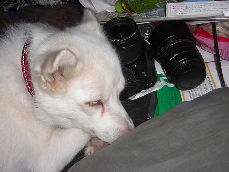 カメラを枕にして寝るな!ってかこんなとこにカメラ置くな(^^ゞ