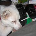 写真: カメラを枕にして寝るな!ってかこんなとこにカメラ置くな(^^ゞ