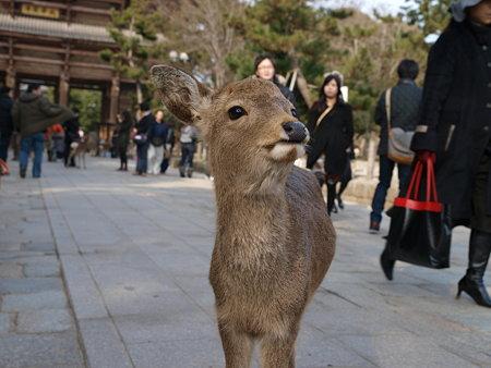 おすまし小鹿